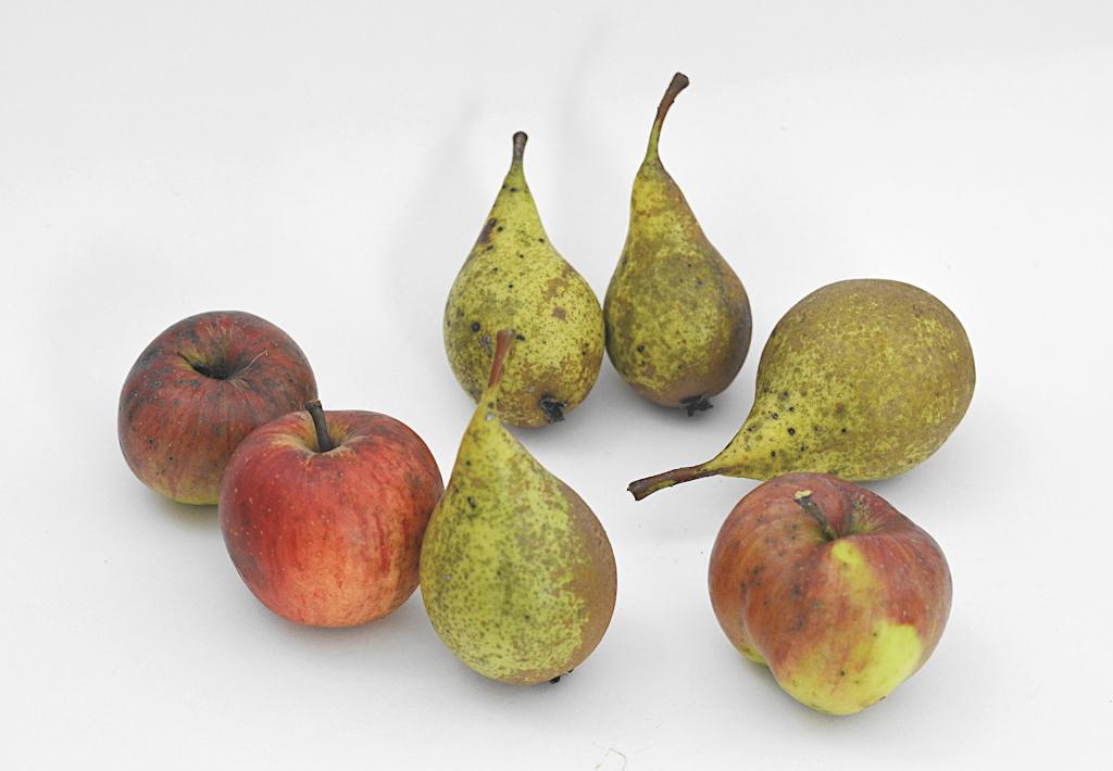Äpfel und Birnen als Symbol für Familientherapie